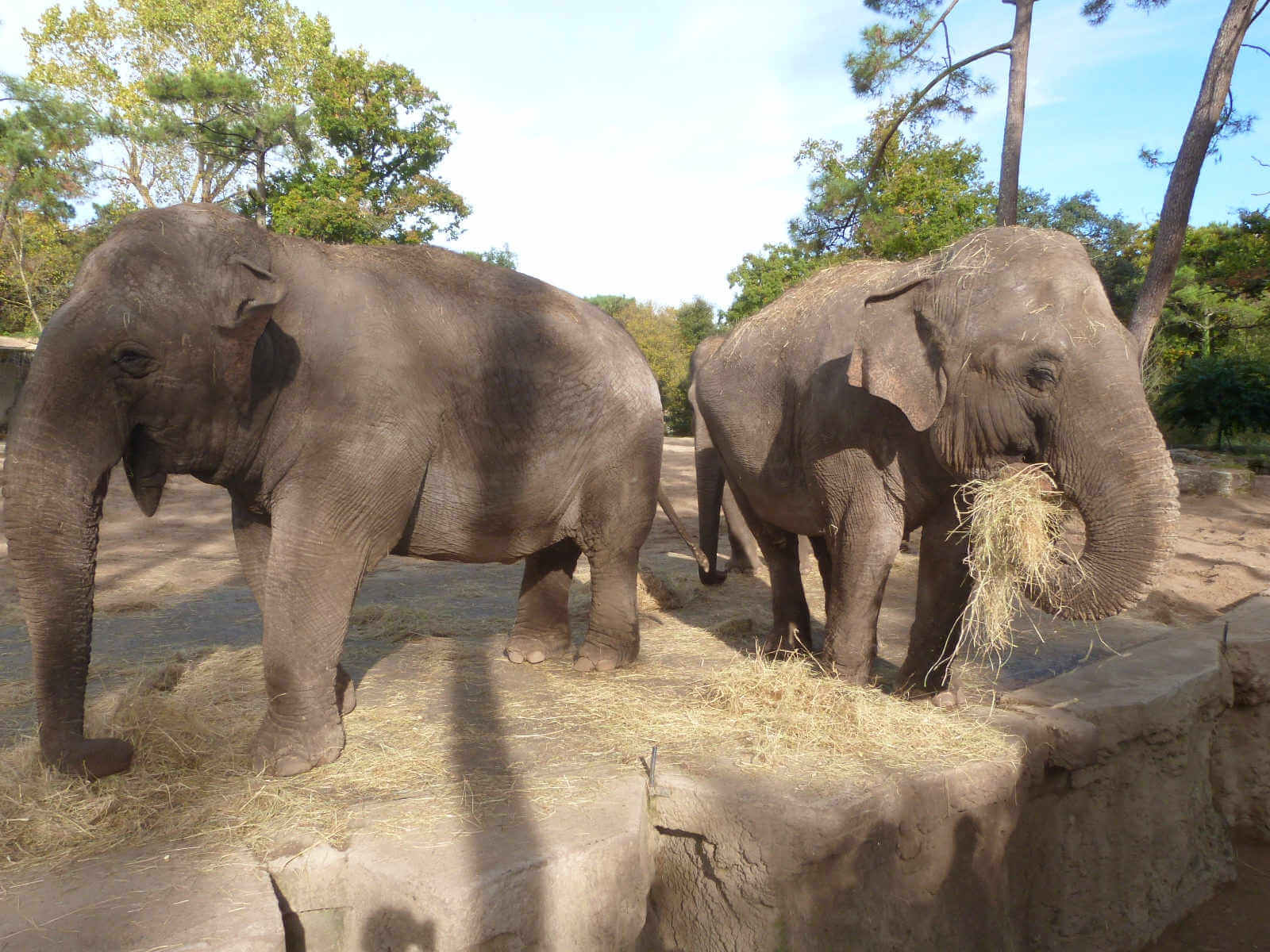 Elephants Zoo